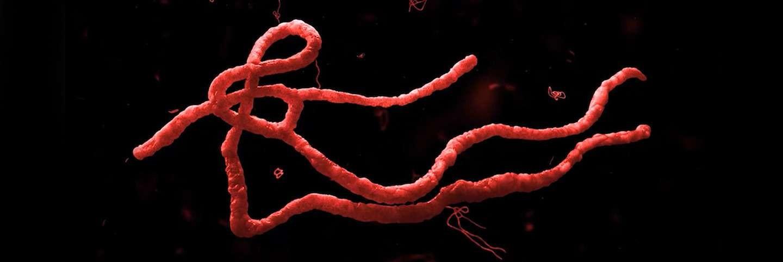 Постріл червоного мікробу на чорному фоні